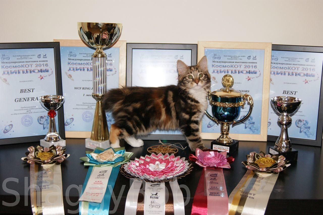 Выставки котов в уфе
